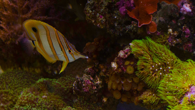 Exotic saltwater fish for sale in atlanta the fish store for Salt water fish store