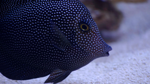 Exotic saltwater fish for sale in atlanta the fish store for Exotic saltwater fish